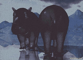 a 1st hippo. ground is shiny blue.a 2nd hippo is right of the 1st hippo.the 2nd hippo is facing north.
