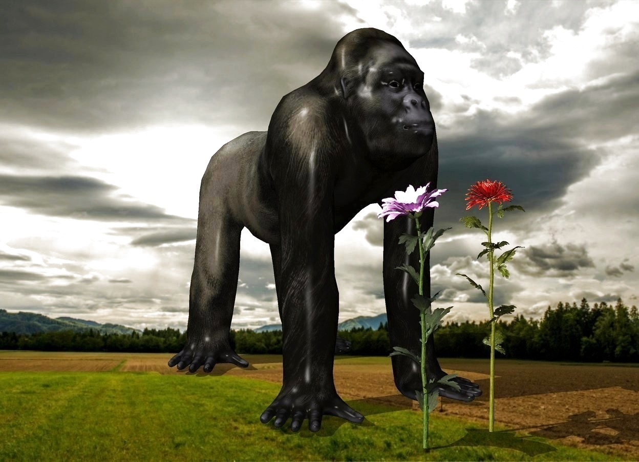 Input text: the 3 foot tall flowers in front of the gorilla.