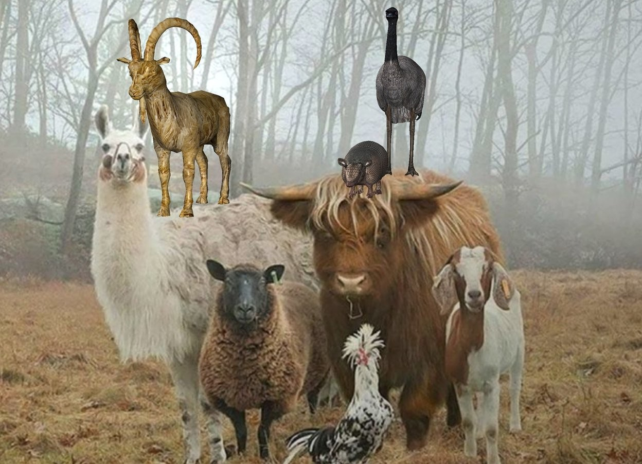 Input text: The [image-12476] backdrop. The fur goat. The large animal is behind and two feet to the right of the goat. the bird is one foot behind the animal.