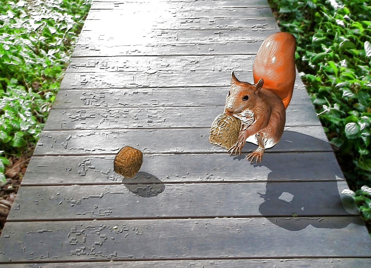 Input text:   a squirrel. 1st .2 feet tall walnut is -.5 feet above and -.1 feet in front of the squirrel. backdrop is tree. 2nd .19 feet tall coffee brown walnut is .3 feet left of and .2 feet in front of the squirrel. shadow plane is visible. a orange point light is 1 inch above the 2nd walnut.