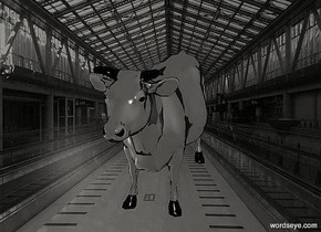 a 100 inch tall shiny black cow.the horn of the cow is  black.it is evening.sky is gray.