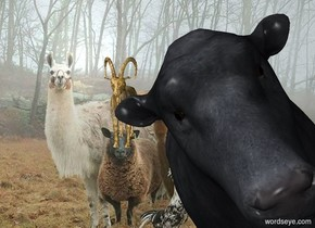 The [image-12476] backdrop. The fur goat. The large animal is behind and two feet to the right of the goat. the bird is one foot behind the animal. the cow is 15 feet in front of the animal. it is leaning 30 degrees to the right.
