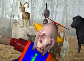 The [image-12476] backdrop. The fur goat. The large animal is behind and two feet to the right of the goat. the bird is one foot behind the animal. the large cow is 3 feet to the right and -12 feet above the animal. it is facing southwest. the clown is 18 feet in front and -10 feet above the bird. he is leaning 30 degrees to the left. the pig is -3.2 feet above the clown. it is 1.6 feet tall. it is -5.75 feet to the left of the clown. it is leaning 30 degrees to the left.
