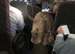 The  image  backdrop. A rhinoceros. The shadow plane.