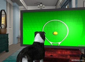 a television is on a .5 foot tall table. the television's screen is  [scene].  a small border collie is  in front of and -1 foot left of the table. the border collie faces the television.