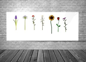 the 1st wall is white. the 1st giant flower is in front of the wall. the 1st giant flower is three feet above the ground. the 2nd giant flower is one foot to the left of the 1st giant flower. the 3rd flower is one foot to the right of the 1st giant flower. the 3rd flower is 2 feet above the ground. the 4th giant flower is one foot to the right of the 3rd  flower. the 5th giant flower is one foot to the left of the 2nd giant flower. the 6th giant flower is one foot to the left of the 5th giant flower. the 7th giant flower is one foot to the right of the 4th giant flower. the 7th flower is 2.5 feet above the ground. the 4th flower is 2.5 feet above the ground. the light is in front of the 1st wall. the backdrop is wall.
