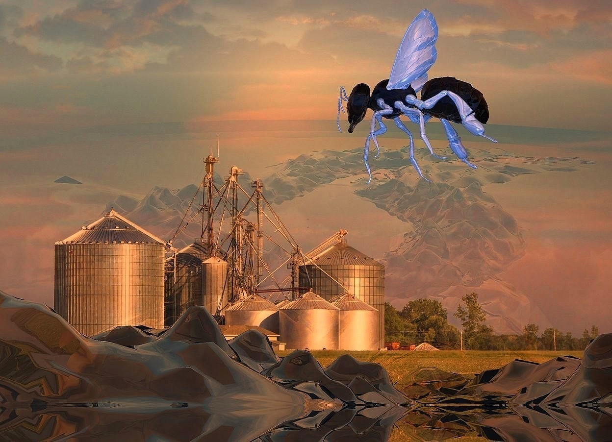 Input text:  a shiny [corn] backdrop.sky is shiny.ground is visible.ground is clear.ambient light is gray.a 1st 70 inch tall clear white bee is 100 inch above the ground.the wing of the 1st bee is  shiny delft blue. the 1st bee is facing north.sun is old gold.