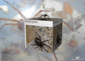 image-14487 cube. Spider backdrop. A large spider is on the cube.