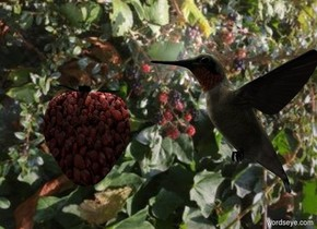 image-14532 Backdrop. [Berry] berry is left of a small hummingbird. The hummingbird is facing the berry. Azimuth of the sun is 20 degrees. Camera light is black. A light is above the hummingbird. A light is behind and left of the hummingbird.