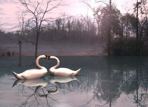 Backdrop is [heath]. A swan is -1 foot above a field. It is leaning 15 degrees to the back. The field is 10 feet wide water. The field is 50% shiny and dark. A swan is -10 inch in front of the swan. It is facing northeast. It is leaning 12 degrees to the back. Sun is pink. Camera light is black. A light is 2 feet above the swan.