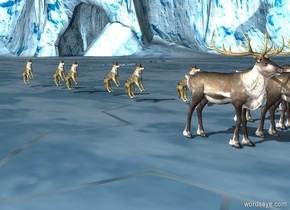 There is a pack_of_wolves behind a herd_of_reindeer.