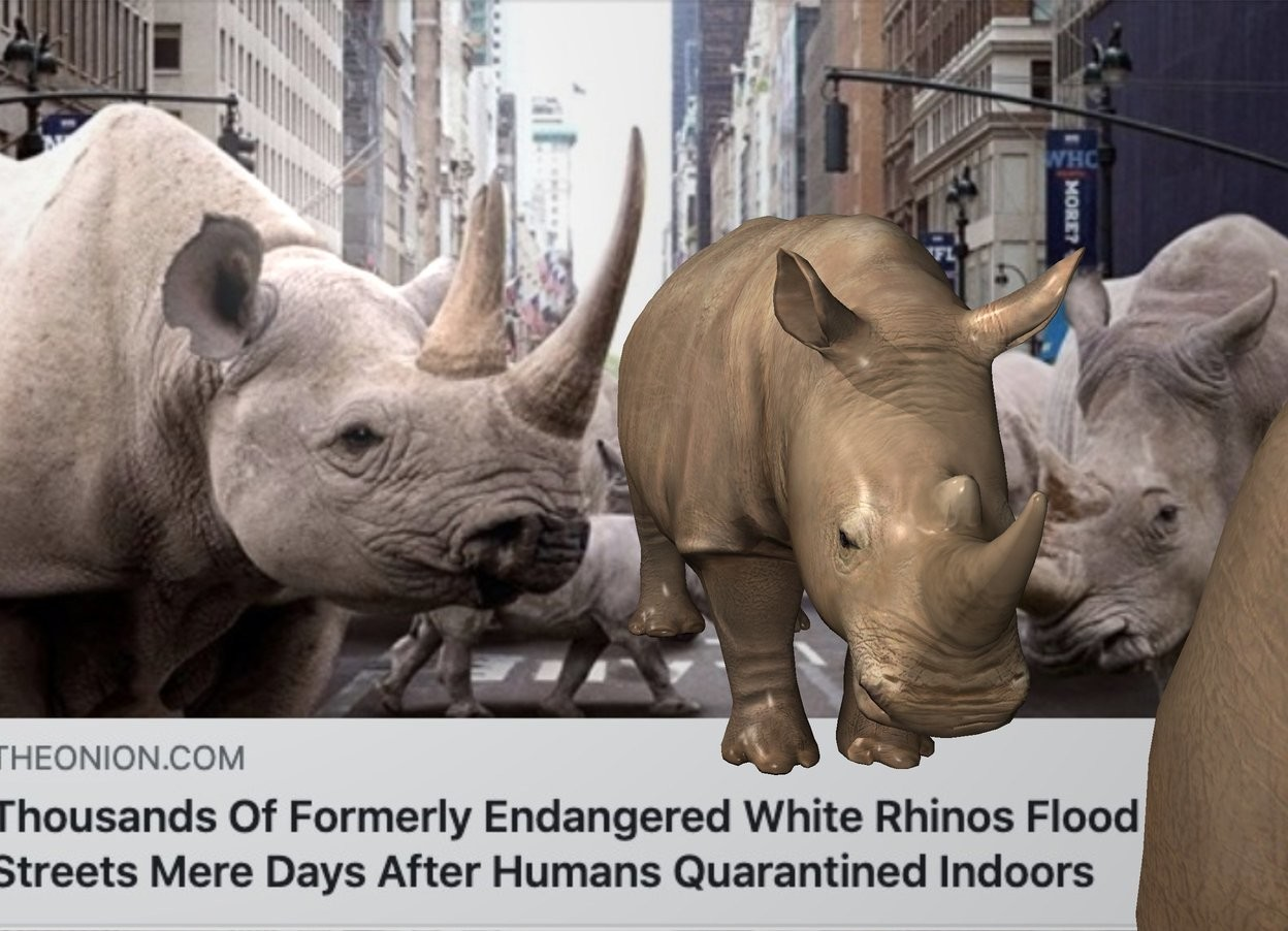 Input text: The  image  backdrop. a rhinoceros. another rhinoceros is 2.9 feet in front of the rhinoceros.