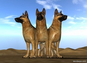 1st dog is -3 feet east of 2nd dog. 1st dog faces southeast. 2nd dog faces southwest. 3rd dog is -2.05 feet east of 2nd dog.
