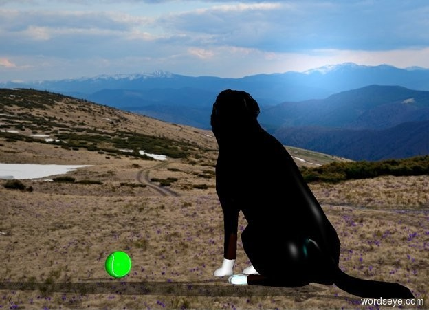 Input text: a dog.field backdrop.a cyan light is behind the dog.a ball is 6 inches right of the dog.it is in front of the dog.