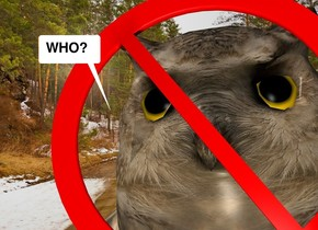 The owl is in the forest. The very small not sign is -7 inches above and in front of the owl.