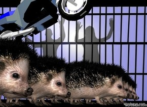 Jail backdrop. A hedgehog is behind a hedgehog is behind a hedgehog. A hedgehog is behind a hedgehog is behind a hedgehog. A hedgehog is behind a hedgehog is behind a hedgehog. A hedgehog is behind a hedgehog is behind a hedgehog. A tiny  shiny motorcycle is -2 inch above the hedgehog. It is leaning back.