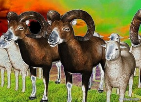 ten sheep.nine sheep are in front of the ten sheep.eight sheep are in front of the nine sheep.backdrop is shiny.
