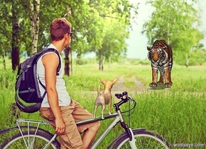 the dog is in the park. the shadow plane is visible. it is noon.  the tiger is 8 feet behind the dog. it is two feet right of the dog. the tiger is facing the dog.the dog is facing the tiger.