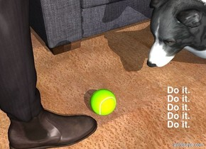 a person. a lawn green tennis ball is in front of the person. a border collie is .2 feet in front of the ball. it faces the ball.  it leans 45 degrees to the front. it is 1 foot in the ground. ground is 2 foot wide [wood]. a light is 10 feet left of the person. a sofa is right of and in front of the person. the sofa faces left.
