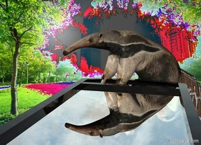 An anteater is -2.5 feet above and -1.8 feet behind and -4.5 feet left of a large clear mirror. It is leaning 30 degrees to the back. It is facing southwest. The mirror is leaning 90 degrees to the back. Summer backdrop. Backdrop is 130% dark. The sun is silver.