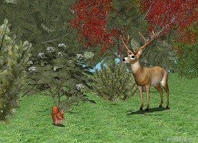 It is noon. Sky is sky blue, the ground is [grass]. The first tree is 5 feet away from the second tree. the second tree is facing the first tree. The third tree is .5 feet to the left of the deer. The third tree is facing the deer. The deer is to the left of the second tree. The fourth tree is -.8 feet behind and to the left of the deer. The boxwood is to the left of the deer. The 5 foot tall hortensia is in front of the boxwood.  The 6 foot tall boxwood is 7 feet in front of the deer. The 1 foot tall squirrel is 5 feet in front of the deer. The squirrel is facing right.
