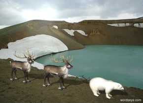 [cliff] backdrop.  A polar bear is on the ground. A reindeer is 5 feet behind him. 2nd reindeer is 5 feet behind him.