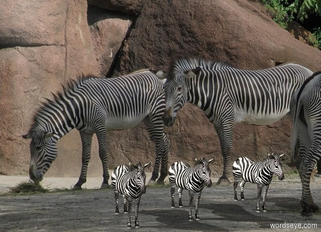 Input text: zoo backdrop. A zebra is on the ground. 2nd zebra is 5 feet left of him. 3rd zebra is 3.5 feet left of him.