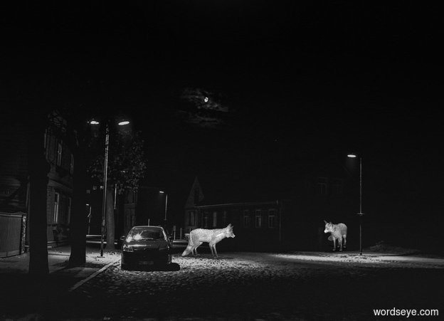Input text: 100% dark [street] backdrop.  The fox faces east. The fox is gray. 2nd fox is 3 feet east of him and 3 feet north of him. He is gray.  It is noon.