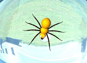 orange spider in a clear sphere on a silver lake