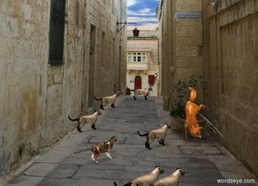 alley backdrop.a 1st cat.a 2nd cat is 1 feet in front of the 1st cat.it is 6 inches right of the 1st cat.a 3rd cat is 3 feet in front of the 1st cat.a 4th cat is 2 feet in front of the 2nd cat.it is right of the 2nd cat.a 5th cat is 3 feet in front of the 4th cat.a 6th cat is 2 feet in front of the 5th cat.it is left of the 5th cat.pale shadow plane.a cat is 10 inches right of the 6th cat.it is facing left. 2nd fox is 4 feet in front of the 1st cat and .5 foot west of him. 2nd fox is facing north.   it is noon. The cats face southwest.
