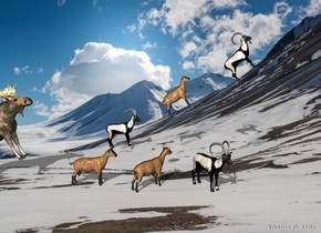 mountain backdrop. 1st goat leans 10 degrees to the back. 2nd goat is 1 foot in front of him and -1 foot above him. He leans 30 degrees to the back. 3rd goat is 1 foot in front of him and -1 foot above him. He leans 45 degrees to the back.  4th goat is 10 feet west of 1st goat. 5th goat is 1 foot in front of him. He faces southeast. 6th goat is 1 foot in front of him. He faces southwest. A deer is 1 foot behind 4th goat. He leans 30 degrees to the back.