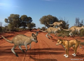 road backdrop. A kangaroo is .5 feet above the ground. A dingo is 2 foot east of him. He is on the ground. He faces him. A kangaroo is 5 feet behind him. A kangaroo is east of him. A kangaroo is 5 feet behind him. The kangaroos lean 30 degrees to the front. They face southeast.