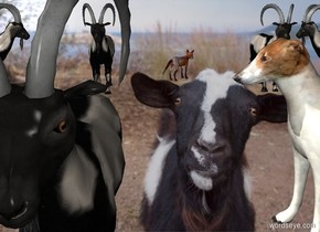 [bizarre] backdrop. sky is [bizarre]. 1st goat is on the ground. 2nd goat is 10 feet behind him and 6 feet east of him. 3rd goat is 6.5 foot west of him. 4th goat is 0.5 foot east of 2nd goat. He faces west. 5th goat is 12.25 feet west of him. He faces east. A fox is 1.5 feet east of 1st goat and  14 feet behind him. He faces northeast. A dog is 1.5 feet east of 1st goat and -1 feet behind him. He faces west.