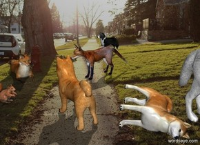 [sidewalk] backdrop. Sky is [sidewalk]. 1st fox is -.2 feet above the ground.  He faces southeast. 2nd fox is 1 feet right of him. He is on the ground. He faces southwest. 1st dog is 1 foot south of him and 0 foot east of him. He leans 90 degrees to the left. 2nd dog is .5 feet left of him. He faces northwest. 3rd small dog is 5 feet behind him. He faces southwest. A squirrel is 1 foot south of and -1.4 feet east of 1st fox. He faces east. A white wolf is -.5 foot right of the 1st dog and -3 feet north of him. He faces southeast. Sun's azimuth is 0 degrees. Sun's altitude is 45 degrees.