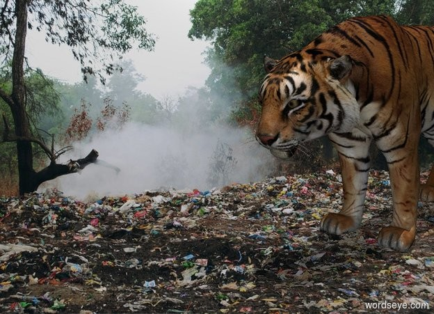 Input text: [trash] backdrop. 1st tiger is on the ground. Camera light is gray. It is noon.