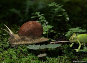 Camera light is gray. Sun's azimuth is 0 degrees. Sun's altitude is 90 degrees. [woodland] backdrop. sky is [arid climate].  A snail is 0 feet above the ground. A tiny lizard is 0 feet behind him and -.2 feet above him.