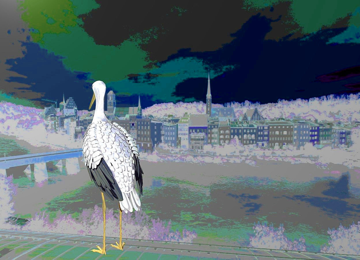 Input text: a [wb] backdrop.a 50 inch tall shiny stork.the stork is facing northwest.