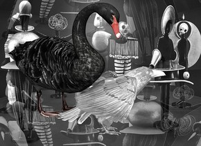 a 120 inch tall shiny white raven.backdrop is shiny [os2].sky is [os2].sky is 2500 feet tall and 3500 feet wide.a 180 inch tall  black swan is -80 inch above the raven.the swan is -320 inch in front of the raven.the swan is facing southwest.