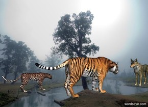 Sun's azimuth is -90 degrees. Sun's altitude is 45 degrees.   [river] backdrop.  1st tiger is 0 feet above the ground. A wolf is 2 feet south of him. He faces north. A clouded leopard is 3 feet east of the tiger and -3.7 feet north of him.