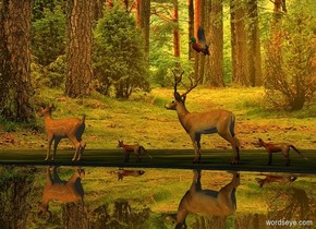 ground is [grass]. Sun's azimuth is 90 degrees. Sun's altitude is 45 degrees. Camera light is black. Sun is orange. 1st deer is on the ground. A small clear lake is east of the deer. 1st fox is 3 feet north of the deer. 2nd deer is 1 feet north of him. 2nd fox is 1 feet north of him. A duck is 1 foot above 2nd deer.