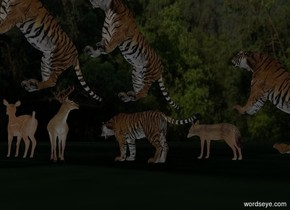 It is night. Ambient light is gray. Camera light is black.  [forest] sky.   1st tiger faces west. He is 0 feet above the 25% dark green [grass] ground. 2nd jackal is -6 feet east of him and 5 feet north of him. He faces west. 1st deer is 1 feet west of him and 8 feet south of him. He faces east. 2nd deer is 2 feet west of him. She faces west. 2nd tiger is 0 feet east of 1st tiger and 0 feet north of him. He faces west. He is -1.5 foot above the ground. He leans 45 degrees to the back. A tiger is 1 foot west of him and -6 feet above him. He is 0 foot south of him. He leans 45 degrees to the back. A  tiger is 0 feet west of him and -8.5 feet above him. He is -4 foot south of him. He leans 45 degrees to the back. He faces south.