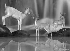 Sun's azimuth is -90 degrees. Sun's altitude is 45 degrees.   [forest] sky.   1st gray deer faces north. He is -.25 feet above the shiny gray [grass] ground. He faces east. A rock is 1 foot east of him. It faces west. A large rock is 0 feet east of it. A gray deer is -1.7 foot above it and -2 foot west of it. She faces west. She leans 14 degrees to the front. A rock is 1 foot west of 1st deer. It faces west. A large rock is 0 feet west of it. A gray deer is -1.7 foot above it and -2 foot east of it. He faces west. He leans 14 degrees to the back.  The rocks are gray.