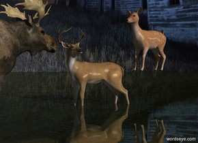 Sun's azimuth is 90 degrees. Sun's altitude is 20 degrees. Camera light is black.  [night] sky.   2nd deer faces south. He is -0.5 feet above the ground.   1st moose faces north.  He is 0.5 feet south of the 2nd deer. He is -0.5 feet above the 20% dark shiny grass ground. 3rd deer is 2 feet north of 2nd deer and -1 feet west of him. She faces south. She is 2 feet above the ground.